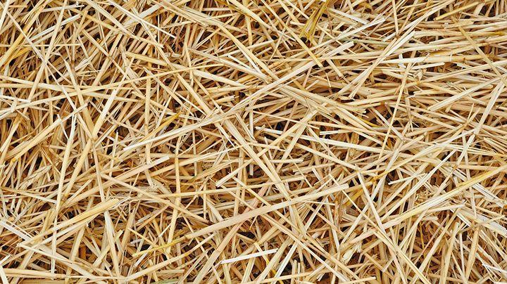 Mulch aanbrengen in je moestuin is altijd een goed idee. Of het nu zomer is of winter, een beschermlaagje over de bodem helpt je de grond te verbeteren. Het houdt ook onkruid weg en zorgt ervoor dat de bodem niet kan dichtslibben. Mulchen in de winter, waarom? Je houdt er onkruid mee op een afstand,…