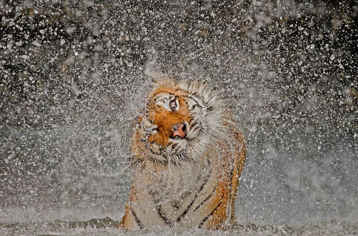 photo by Ashley Vincent - grand prize winner of 2012 National Geographic photo contest