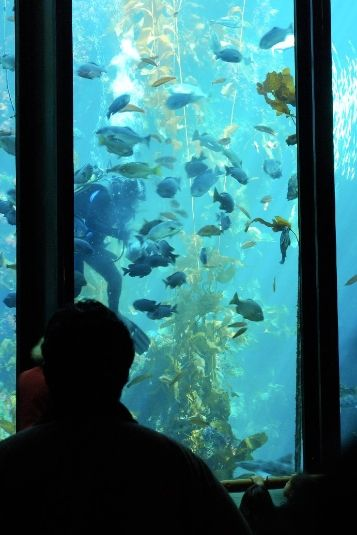 When in San Diego, Hyatt House has you covered with activities. From the Birch Aquarium to the Del Mar Village.