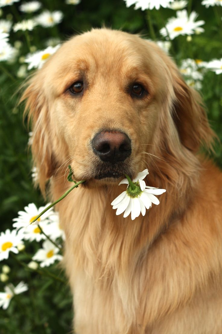 Please don't eat the daisies...
