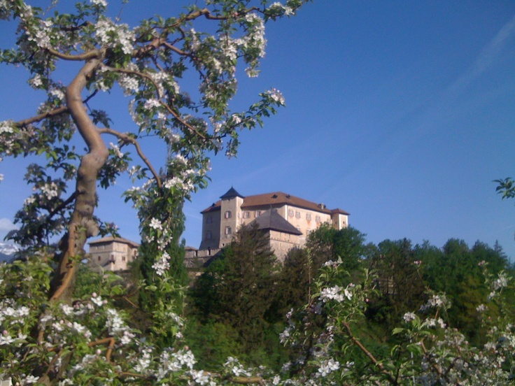 "Castel Thun ""framed"" by appletree blossoms!"