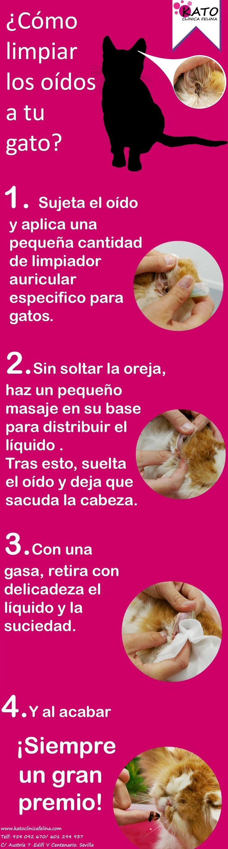 Guía rápida de cómo limpiar los oídos a nuestros gatos   -   Quick guide how to clean our cat's ears.