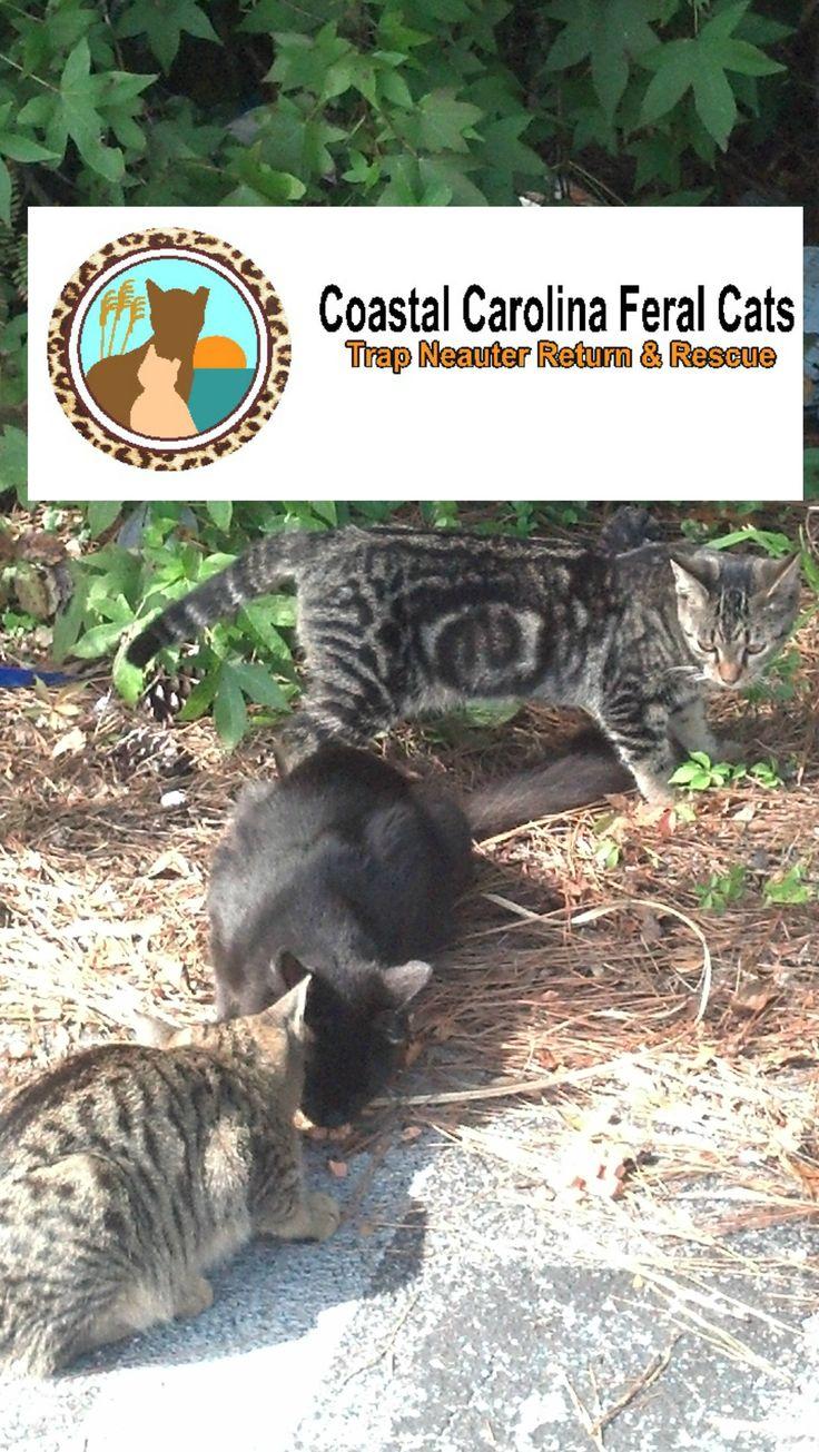 64 best TNR Coastal Carolina Feral Cats images on Pinterest