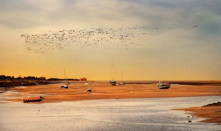 (ID: SN-WEL-02) Hundreds of pink-footed geese fly past Wells next the Sea in the evening looking to roost