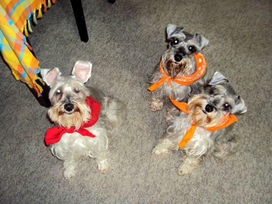Mascotas: Lucas y Lola - Cita en las Diagonales