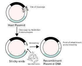 Recombinant DNA - Wikipedia, the free encyclopedia