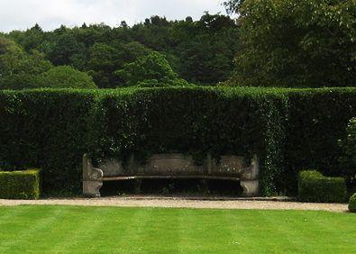Escallonia hedging