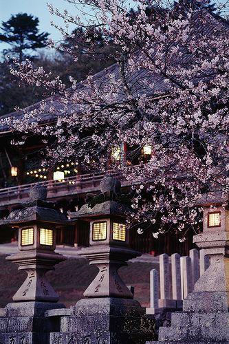 Todai-ji #japan #nara