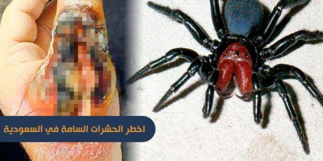 اخطر الحشرات السامة في السعوديه بالصور Insects