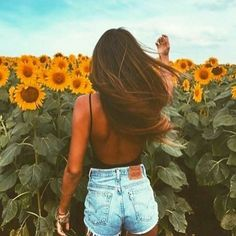 Sunflower fields!