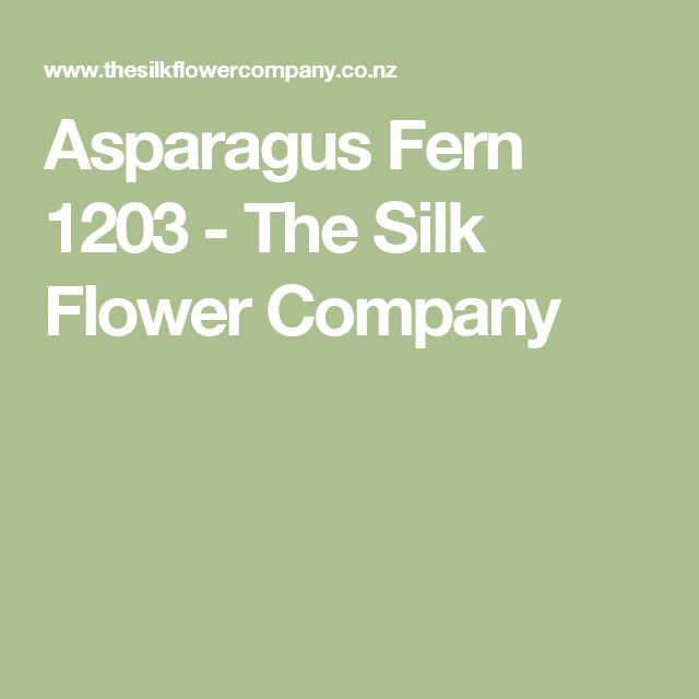 Asparagus fern 1203 the silk flower company catfish pleco i like asparagus fern 1203 the silk flower company catfish pleco i like pinterest asparagus fern mightylinksfo Image collections