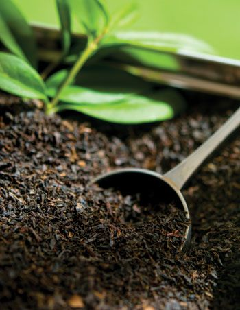 Brew black tea to cure sunburns this summer. Apply to skin after tea cools to touch. Allow to soak and dry into skin.