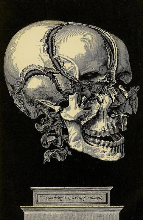 Crushed Human Bone : Best images about skull on pinterest the skulls
