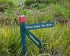 Kirstenbosch National Botanical Gardens Photographs