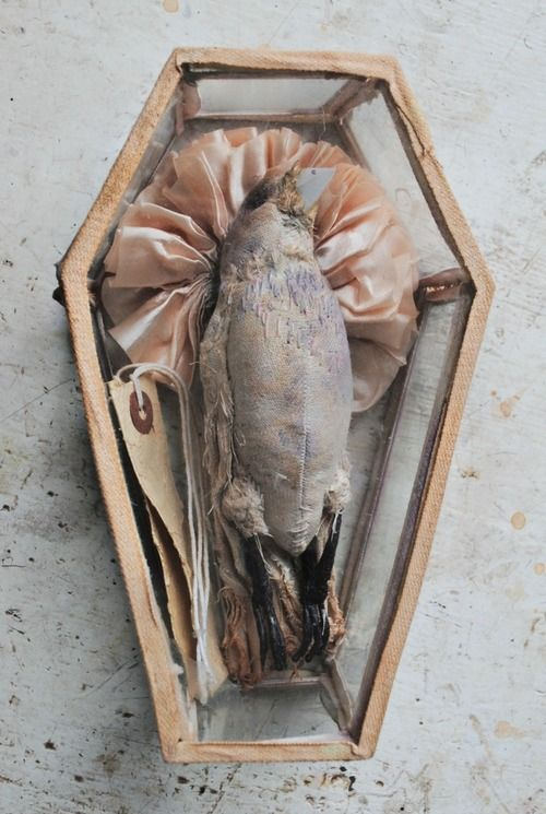 Ohmisterfinch: Textile Dead Bird In Glass Coffin By Mister...:
