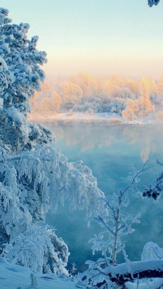 frozen trees widescreen wallpaper -#main