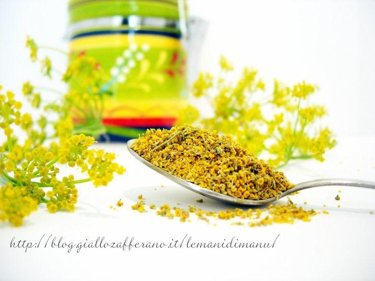 Finocchietto selvatico: raccolta, essiccazione e uso in cucina   Le Mani Di Manu