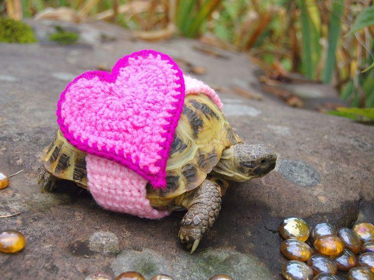 Knusse outfits voor je schildpad