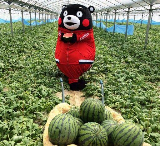 Kawaii kumamon and watermelons