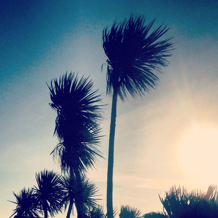 Palm trees Cornwall