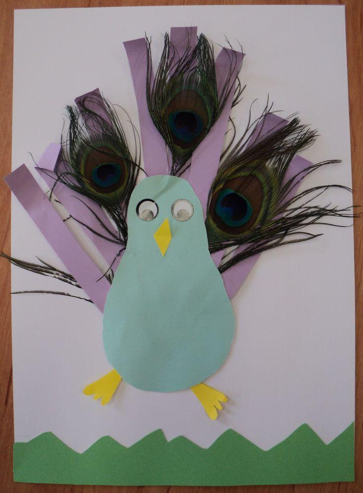 Páv - barevné papíry a pravá paví pera