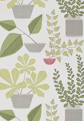 Grafische kamerplanten op een behang van MissPrint.  House Plants Olive Wallpaper by MissPrint. PEFC certified and printed in the UK