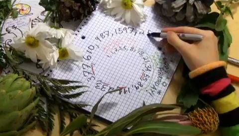 Best explanation of Fibonacci ever!