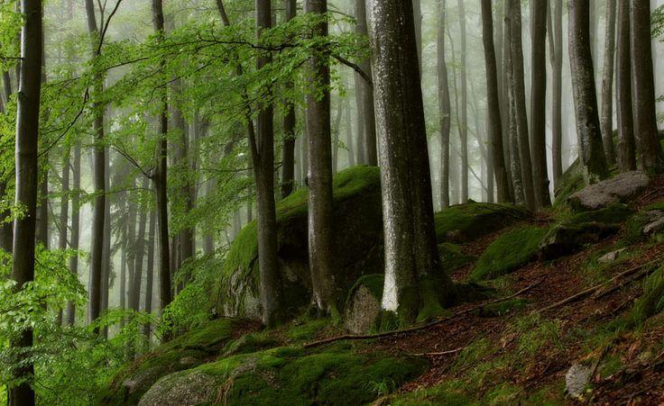 4.Preis: Schna, Nebel im Mühlviertel Kategorie Landschaft / Waldhausen, Nr. 838 bei Waldhausen im Regen aufgenommen http://contest.foto.at/mein-oesterreich/de/photo/838