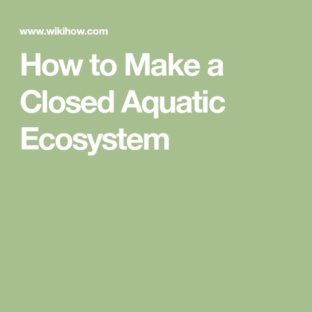 How to Make a Closed Aquatic Ecosystem