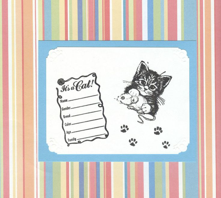 #110 KITTEN/CAT BIRTH ANNOUNCEMENT - Adorable (Set of 5)
