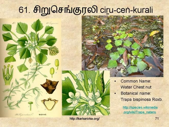 99 Tamil Flowers Kurunjipaatu Flowers 61 70 In 2020 Flowers Flower Names Glory Lily