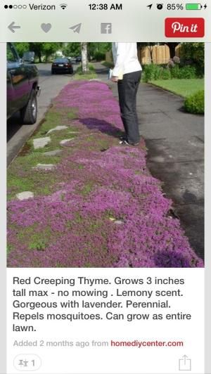 Repels mosquitoes... by grace | Our Alaskan Yard | Pinterest ...