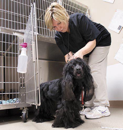 Dieren houden van ons en voelen dat zeke bij een liefdevolle verzorging