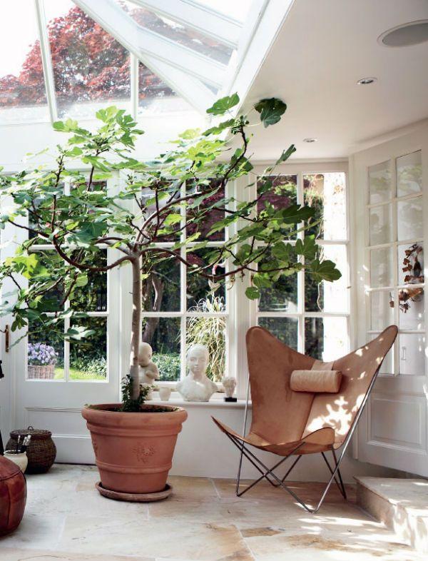 Biophilic design in the home