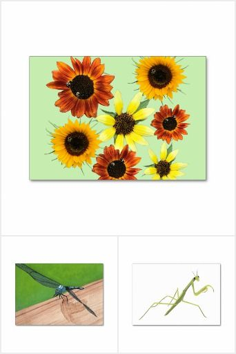 Insect Flashcards - Find images of insects geared towards the adult learner. The text on the back can be customized. Your design requests are welcome. #insects #flashcards #literacy