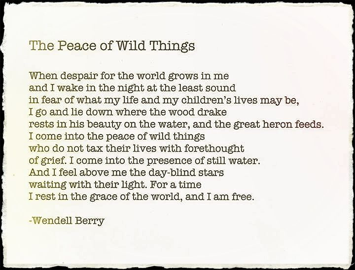 the peace of wild things pdf