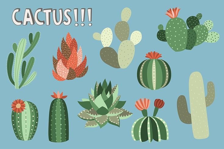 Llama and Cactus Clipart Bundle - Illustrations - 3