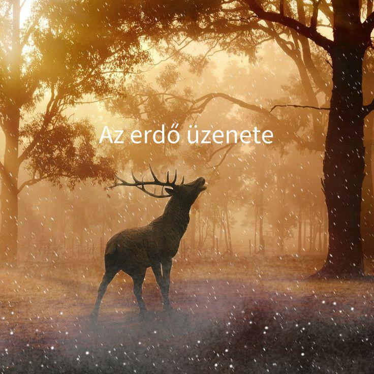 Az erdő üzenete