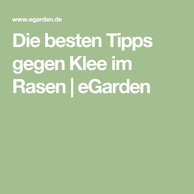 Die besten Tipps gegen Klee im Rasen   eGarden