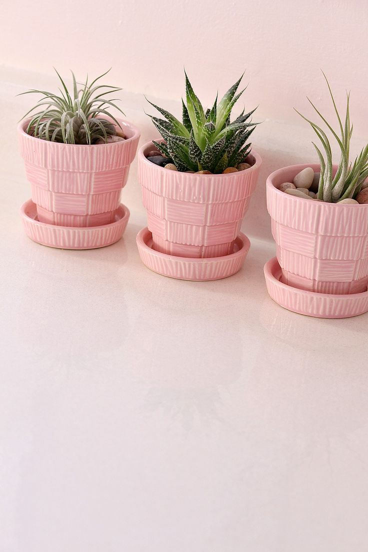 Pink McCoy Planters with Air Plants and a Succulent // Budget-Friendly Grey, Gold   Pink Kitchen Makeover
