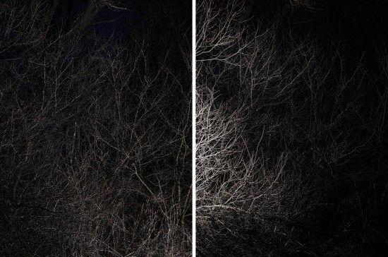 From the series #Jagdrevier. #fineart #wood #light #darkness #photography #Wald #Dunkelheit #Licht #Kunst #Fotografie #augustundjuli