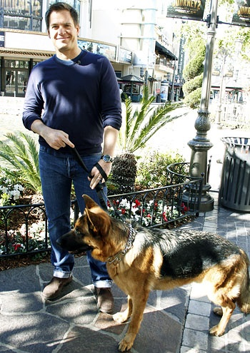 Michael Weatherly and his dog Oriana