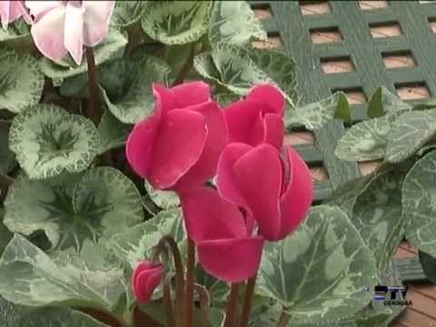 El jardinero en casa | Plantas bulbosas