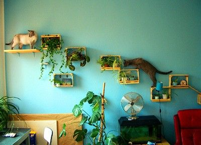 cat stairs...but with edible plants for the kitty