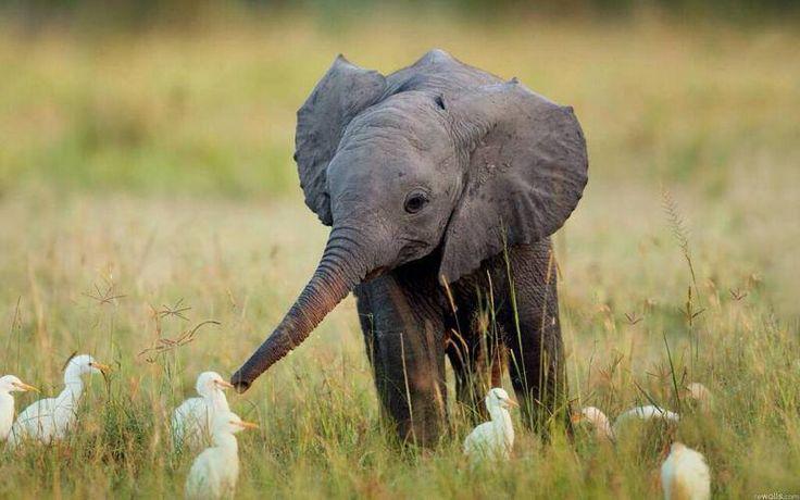 A little elephant making friends.