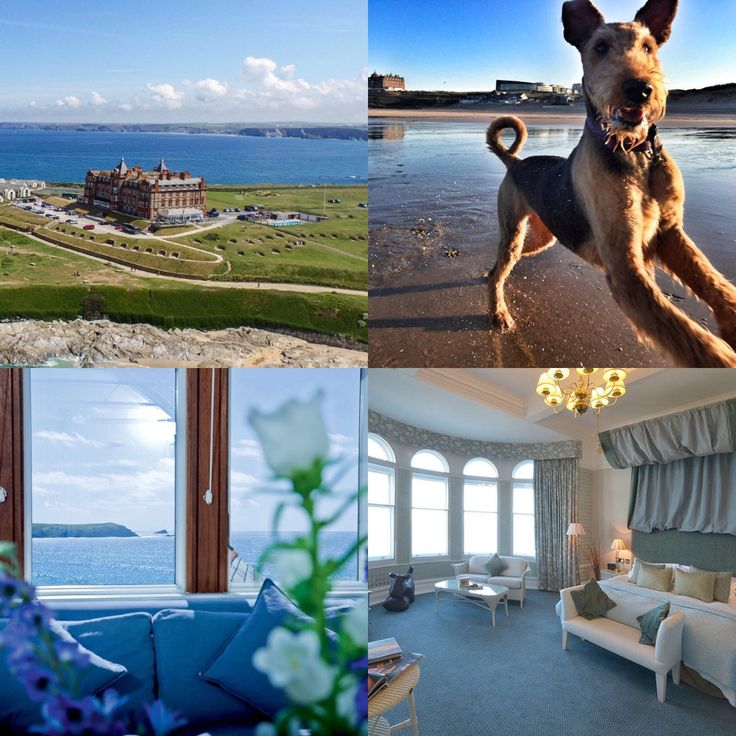 The Headland Hotel And Spa Offer Luxury Dog Friendly Accommodation In Newquay Cornwall Https Dotty4paws Co Uk Businesses Listing Ho