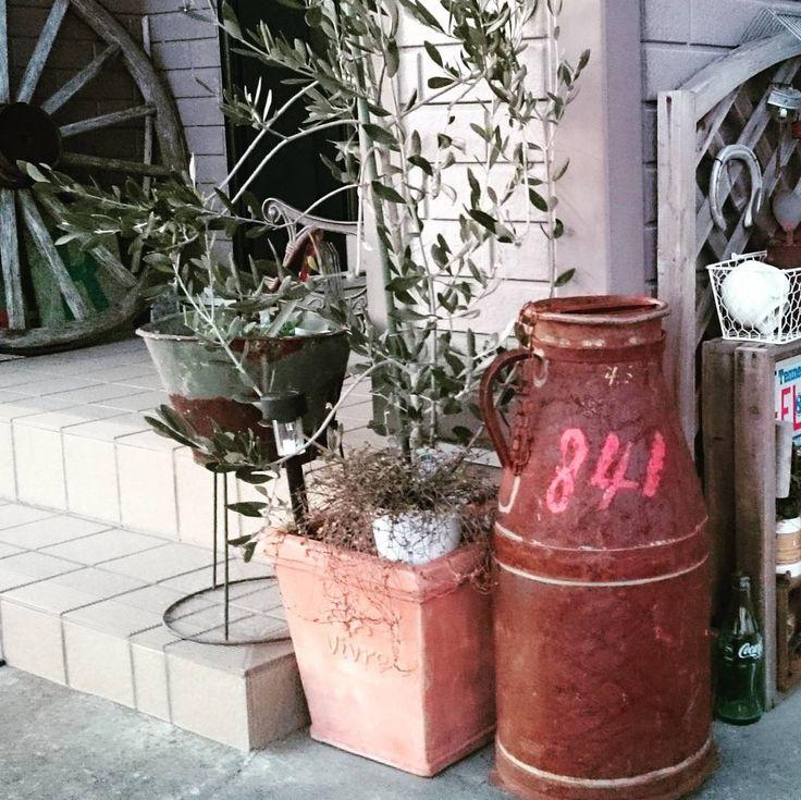 2016.3.2 * * * ミルク缶をジャンクコーナー寄りに  おはようございます。  ジャンクコーナーから玄関の車輪と一望出来るように、ミルク缶もこちらに移動しました。 * * 息子のクラス、昨日の時点でおそらくインフル10人。  そして、昨夕息子も発熱。  これから病院へ行って来ます… * * #お庭#玄関#ガーデン#玄関ガーデン#ガーデニング#車輪#ミルク缶#古道具#蹄鉄#バケツ#ジャンクコーナー#ジャンクガーデン#シャビー#ジャンク#レトロ#ブロカント#錆び錆び#サビサビ#オリーブの木
