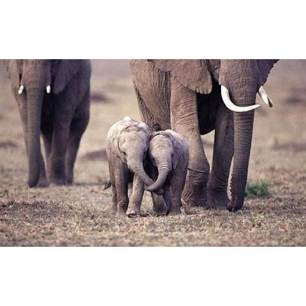 Я люблю ФОТО: Очаровательные маленькие слонята - просмотр альбома found on Polyvore