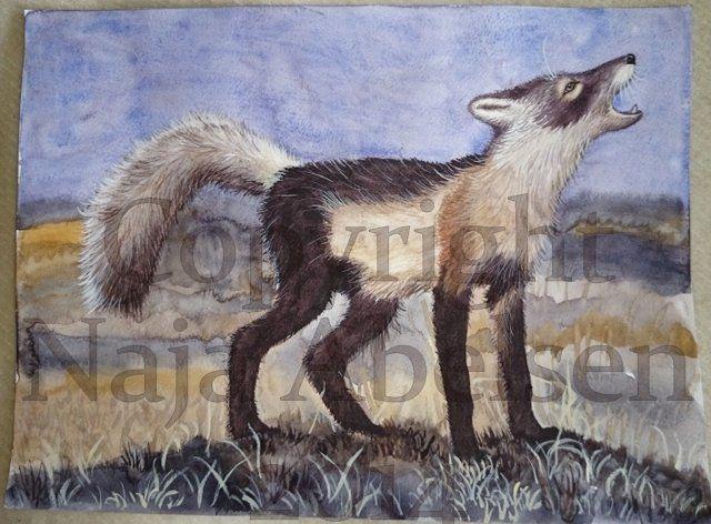 Forårsræven (spring fox)  Er helt vild med fældende ræves skøre pelsdragt. / Absolutely love damning foxes crazy fur.  Akvarel/Watercolour (og en smule akryl/also a bit acrylic) 32 x 24 cm. 2014  Pris: 2.800 kr. / 376 Euro. www.najaabelsen.dk
