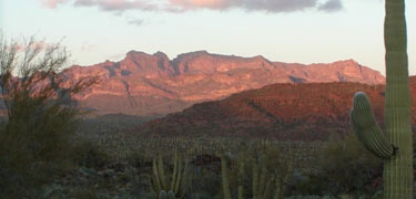 Organ Pipe Cactus National Monument celebrates the life and landscape of the Sonoran Desert.